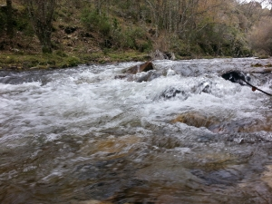 rápido1 río jarama