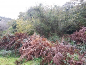 Helechos y otra vegetación