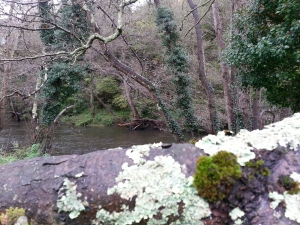 río Nora 2