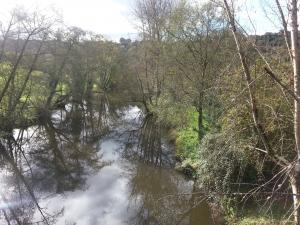 Aguas tranquilas en el río Nora