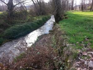 vegetación abierta río Arandilla