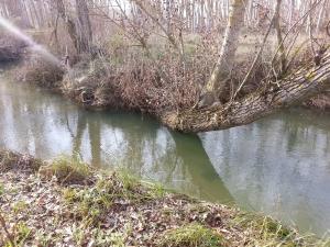 tronco en el río Arandilla