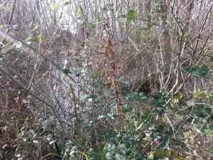 vegetación espesa