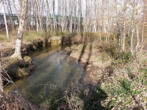 rio Arandilla 2